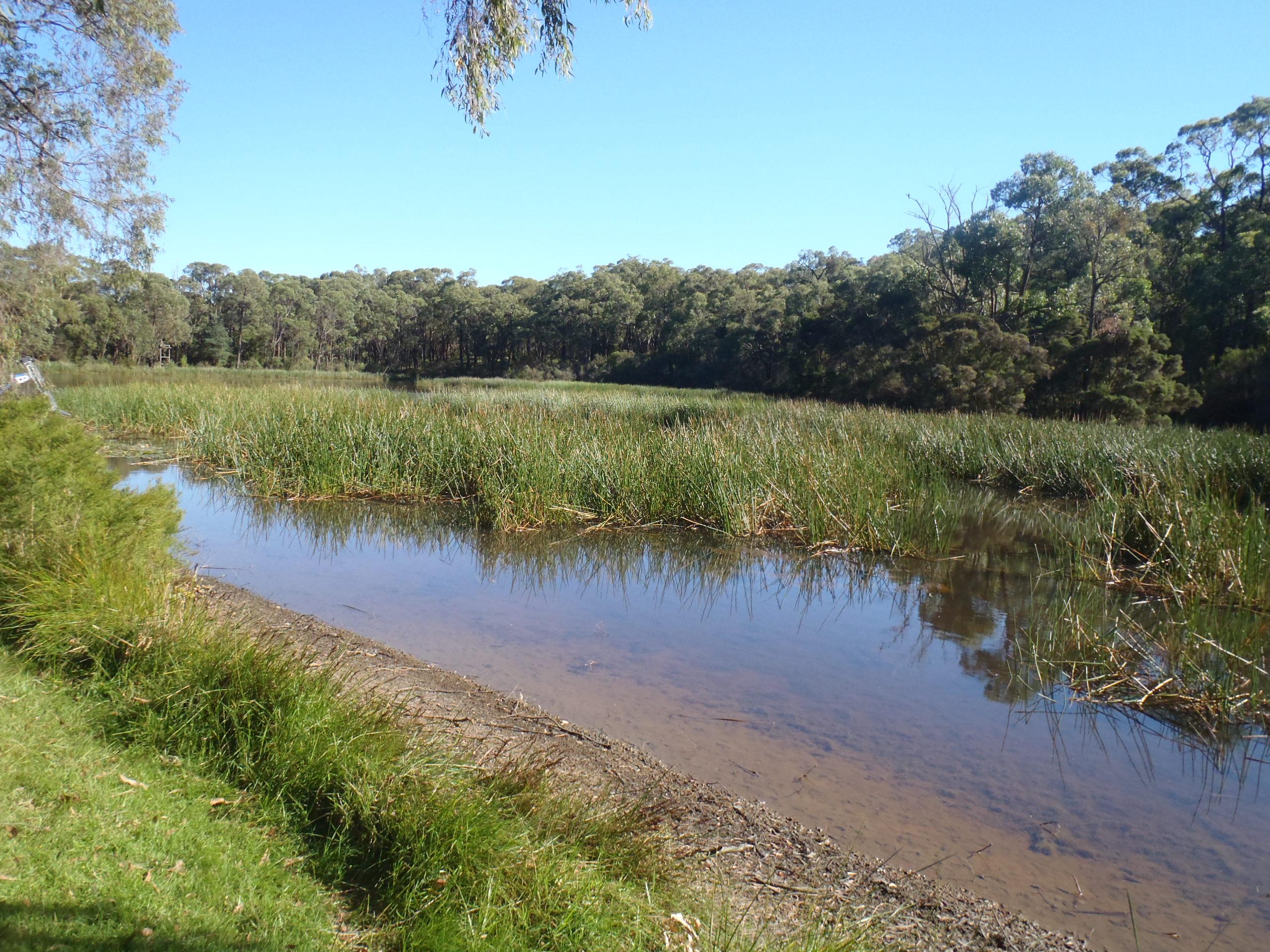 aquatic weed harvesting