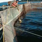 FishFarmLaunch-42-600-450-80